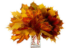 Bouquet of autumn leaves Stock Photo
