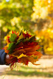 Bouquet of autumn leaves Stock Image