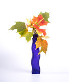 Bouquet of autumn leaves in bright colored vase Royalty Free Stock Photo