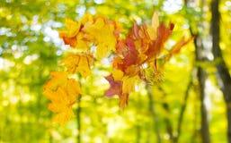 Bouquet of autumn Stock Photos