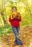 Bouquet of autumn Stock Images