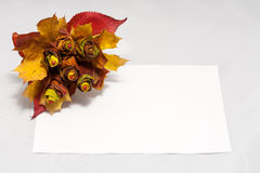 Bouquet of autumn leaves on white paper Stock Image