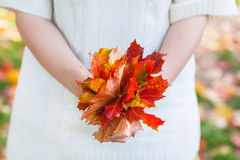 Bouquet of autumn leaves in woman hand Royalty Free Stock Images