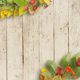 Bouquet of autumn leaves on wooden background Royalty Free Stock Photos