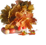 Bouquet of autumn Royalty Free Stock Photography