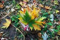 Bouquet of autumn maple leaves. On the log Royalty Free Stock Image