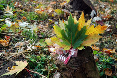 Bouquet of autumn maple leaves. On the log Royalty Free Stock Photo