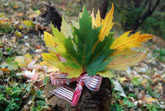 Bouquet of autumn maple leaves. On the log Stock Photos