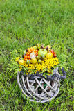 Bouquet of autumn plants in wicker basket Royalty Free Stock Photo