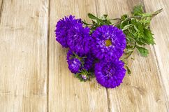 Bouquet of autumn violet asters stock photography