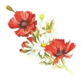 Bouquet avec des pavots et des camomilles Illustration d'aquarelle d'aspiration de main Photo stock