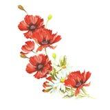 Bouquet avec des pavots et des camomilles Illustration d'aquarelle d'aspiration de main Photo libre de droits