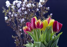Bouquet avec des tulipes image stock