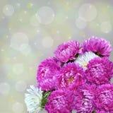 Bouquet avec du charme des asters roses Photo stock