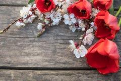 Bouquet avec les fleurs blanches d'abricot et les tulipes rouges sur le fond de vieux, en bois conseils Place pour le texte photos libres de droits