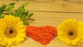 Bouquet avec les fleurs jaunes Images libres de droits