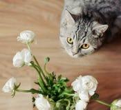 Bouquet avec un chat Image libre de droits