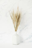 Bouquet of barley spikelets in white vase. In front of pale marble background Stock Image