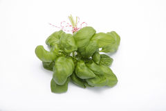 Bouquet of Basil Stock Image