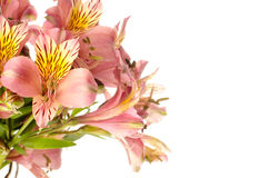 Bouquet of a beautiful alstroemeria flowers on white background Stock Images