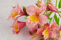 Bouquet of a beautiful alstroemeria flowers on wood Stock Photography