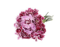 Bouquet beautiful carnations isolated Royalty Free Stock Photo