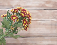 Bouquet of beautiful chrysanthemums Royalty Free Stock Photo