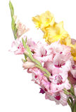 Bouquet of beautiful colorful gladioli Stock Photos