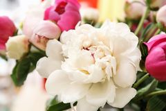 Bouquet of beautiful colorful peony flowers. Closeup Stock Image