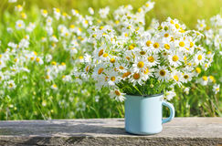 Bouquet of beautiful daisies Royalty Free Stock Images