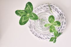 A bouquet of l field four-leaf clovers in a small vase on a ligh Stock Photo