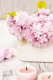 Bouquet of beautiful flowering almond (prunus triloba) Stock Photography