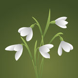 Bouquet of beautiful flowers. Bunch of white snowdrops. The first spring flowers. Floral background. Vector illustration Stock Photos
