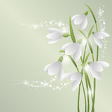 Bouquet of beautiful flowers. Bunch of white snowdrops. The first spring flowers. Greeting card for Mother`s Day, Birthday and Women`s Day. Floral background Stock Images