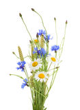 Bouquet of beautiful flowers Cornflowers, chamomiles wheat iso. Lated without shadow royalty free stock images