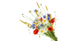 Bouquet of beautiful flowers Cornflowers, chamomiles wheat and. Poppies isolated without shadow stock image