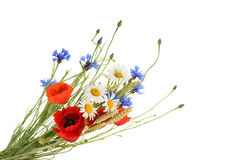 Bouquet of beautiful flowers isolated without shadow stock photos