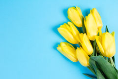 Bouquet of beautiful fresh yellow tulips on blue background and blanc card for text Royalty Free Stock Photo