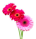 Bouquet of beautiful gerbera on a white background Stock Image