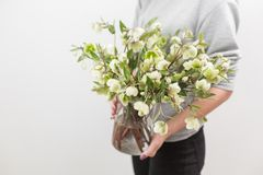 Bouquet of Beautiful green Helleborus. Winter flowers in woman hand. the work of the florist at a flower shop.  Stock Photography