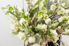 Bouquet of Beautiful green Helleborus. Winter flowers in woman hand. the work of the florist at a flower shop.  Royalty Free Stock Photos
