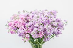 Bouquet of Beautiful lilac color gillyflower, levkoy or matthiola. Spring flowers in vase on wooden table.  royalty free stock photography