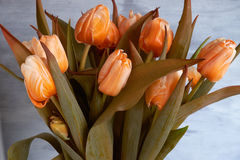 Bouquet of beautiful orange tulips. Bouquet of beautiful orange tulips on a light background Royalty Free Stock Photo