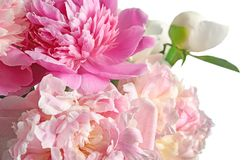 Bouquet of beautiful peony flowers on light background. Closeup Stock Images