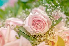 Bouquet of beautiful pink roses. Selective focus Stock Photography