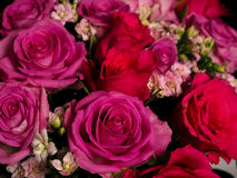 Bouquet of beautiful pink roses Royalty Free Stock Images