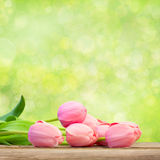 Bouquet of  Beautiful  Pink Tulips on green background Royalty Free Stock Image