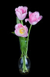 Bouquet of beautiful pink tulips in vase isolated on black Royalty Free Stock Images