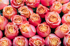 Bouquet Of Beautiful Pink And Yellow Roses. Stock Image
