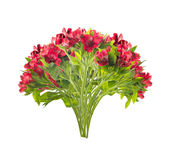 Bouquet of beautiful red freesias,isolated Royalty Free Stock Photos